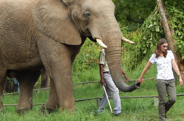 Elephant encounters at Hazyview.